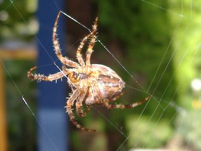 spide_home