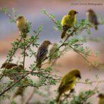 10 birds_1_image