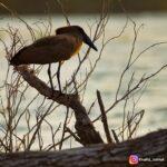 BIRD 2020 3 28 2