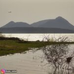 lake_ducks2_2019