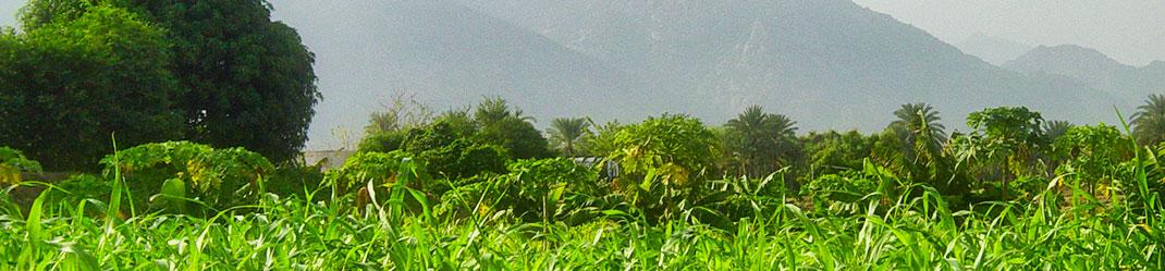 blog_alardha_request_guider_apperance_photo